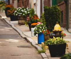 Exterior close up of a Boston sidewalk displaying flowered pots and a fire hydrant