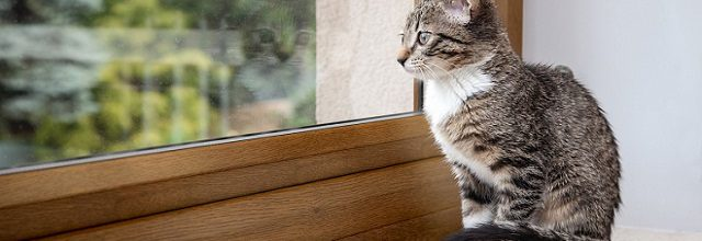 A kitten sitting on a window sill looking outside.