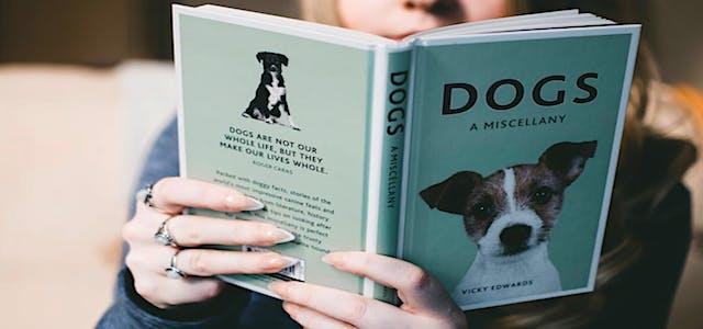 Reading Book Dog