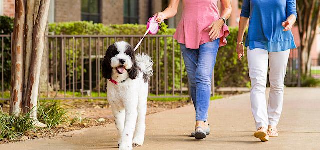 Women Walking Dog