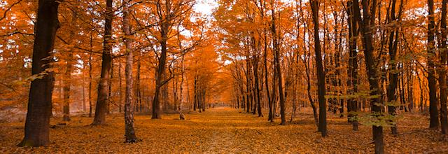 fall trail leaves