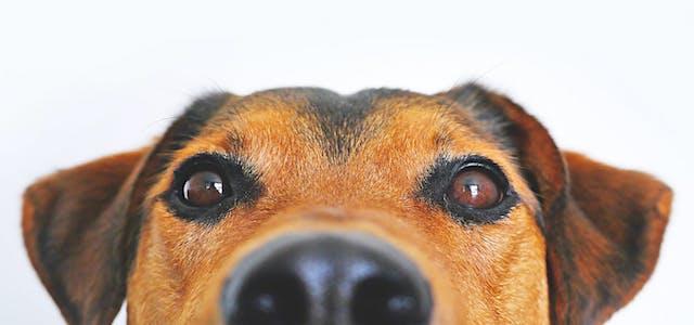 close up of dog