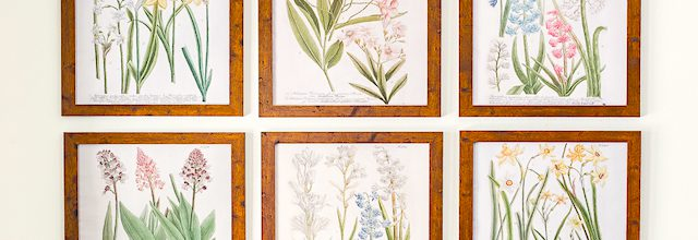 botanical-pictures