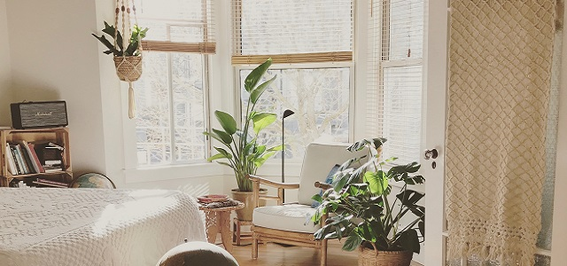 plants in a windowsill with seating