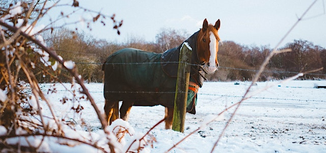 a horse standing in a snowy pasture