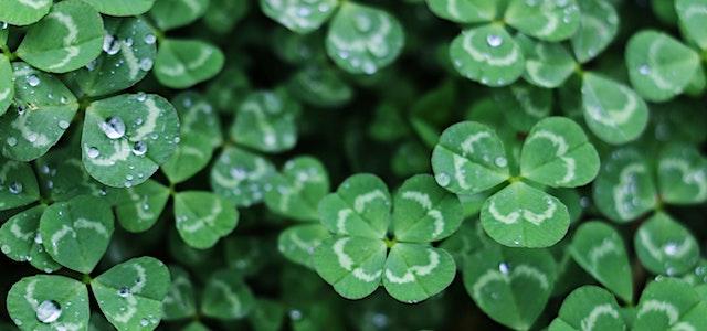 a few four leaf clovers