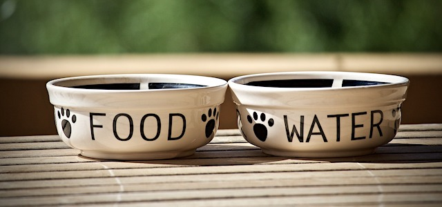 pet food and water bowls