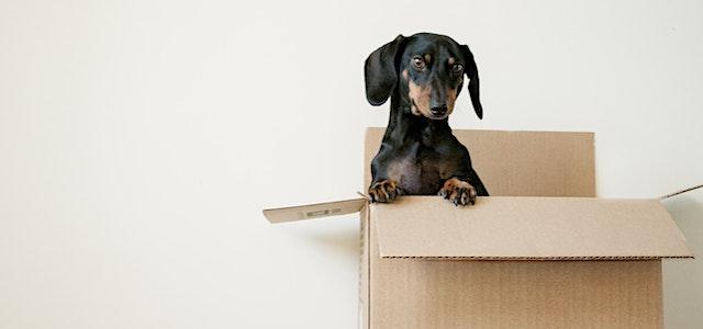 a small dog in a cardboard box